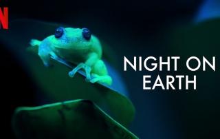 مستند حیات وحش Night on Earth نتفلیکس | مستند زندگی شبانه حیوانات در نتفلیکس