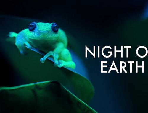 مستند حیات وحش Night on Earth نتفلیکس